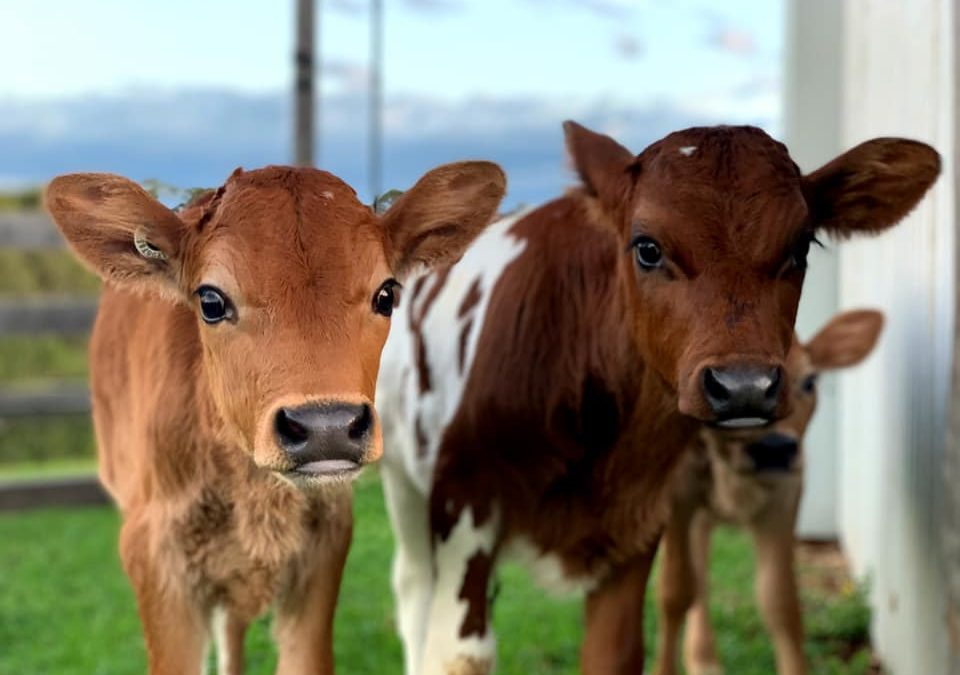 Why You Should Consider Switching To Plant-Based Milk