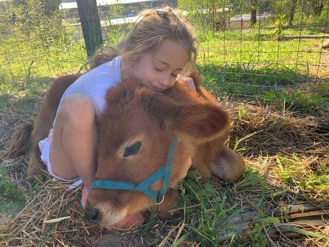 Adopting A Farmed Animal – What You Need To Know