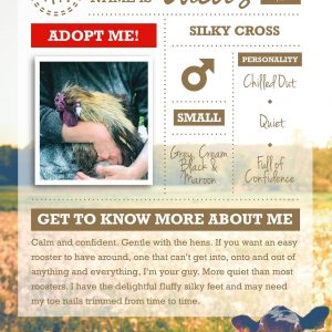 Lucas rescue rooster up for adoption infographic with text