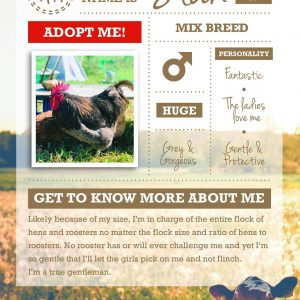 Stan the rescue rooster infographic with text