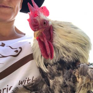 Australian rescue rooster for sponsorship - The Colonel