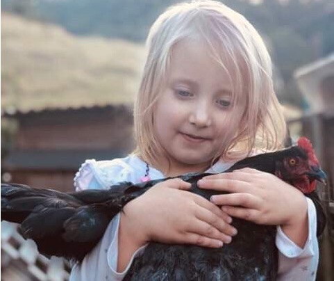 Adopting Hens from us? Here is the Legal stuff you Need to Know.
