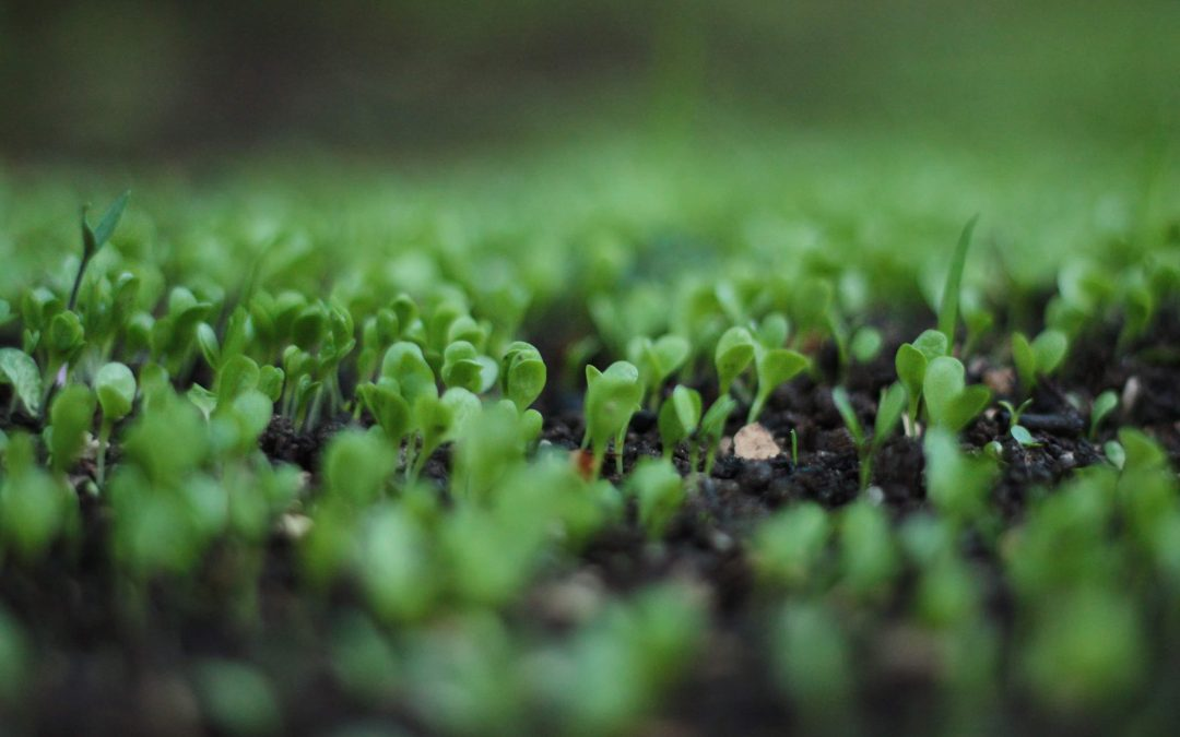 Cultivated Soil is Good Business Sense from the Ground Up